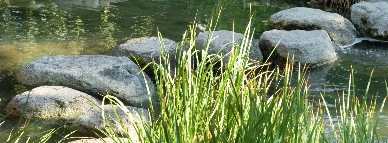 Stepping stones through stream